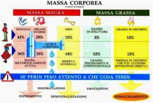Infografica su massa corporea