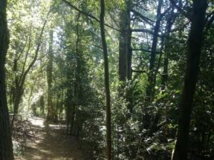 bosco alberato